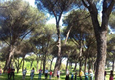 I pini di Villa Pamphilj hanno bisogno di cure immediate ma nel municipio XII non sono previste